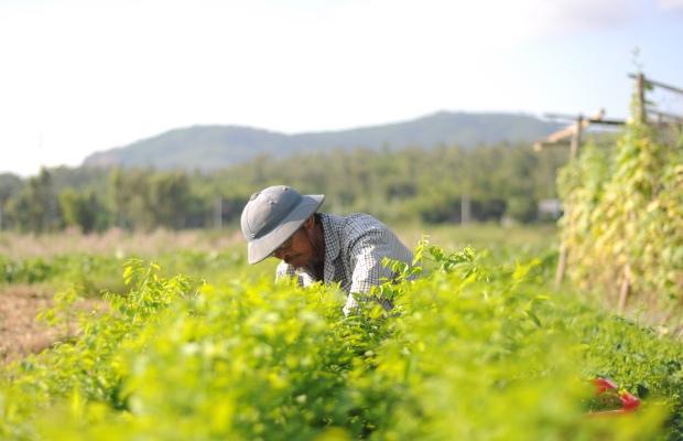 Producer Spotlight: Cam Ne Organic Farm Cooperative